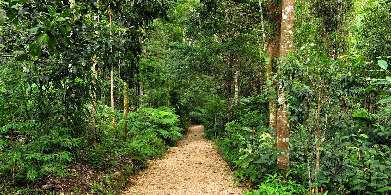 A path in the Retreat through the rainforest of the NSW Far North Coast