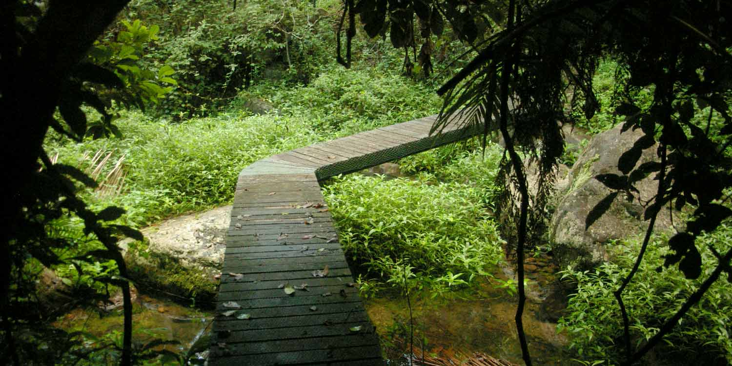 An elevated walking path in the Retreat through the rainforest of the NSW Far North Coast