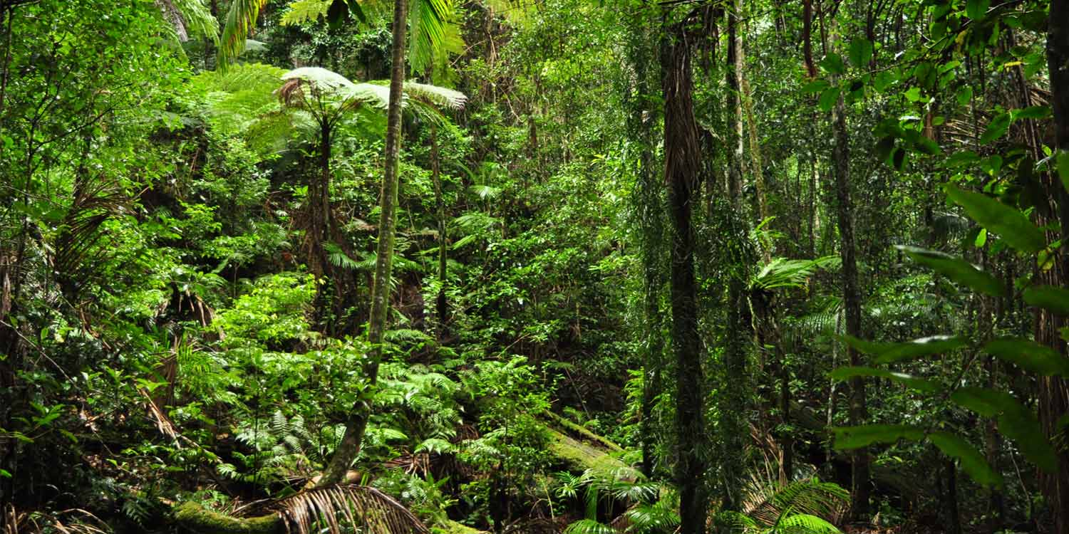 The rainforest of the Crystal Creek are in the Tweed Valley near Byron Bay and the Gold Coast