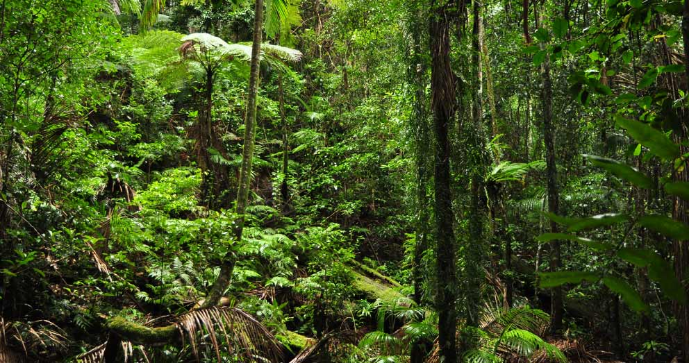 The pristine rainforest of our Retreat helps to preserve the biodiversity of the area